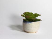 mini plant_web